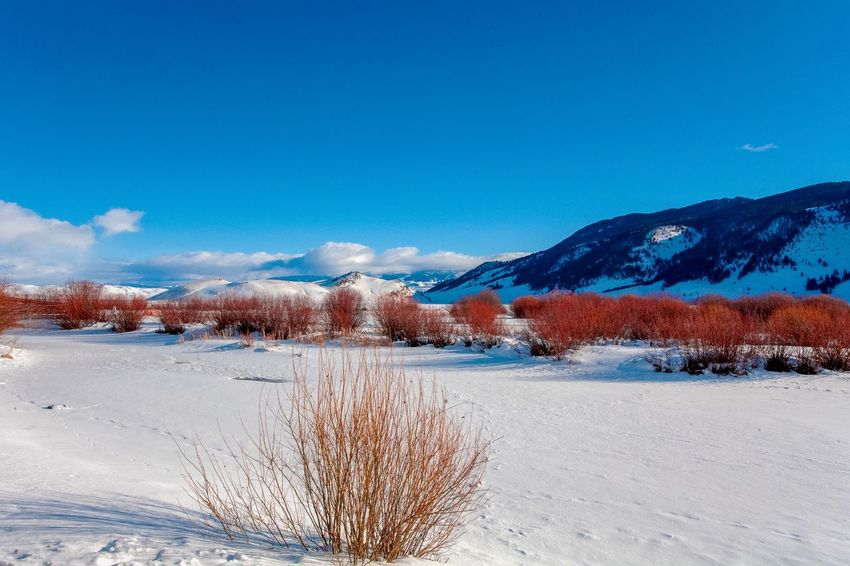 Lamar Valley Vista EyeEm Selects Winter Cold Temperature Snow Sky Nature Plant Blue Land Day Scenics - Nature No People Tranquility Frozen Tranquil Scene Beauty In Nature Copy Space Tree Environment Mountain Outdoors