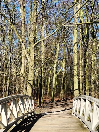 Tree Plant The Way Forward Direction Forest Nature Tree Trunk Trunk Railing Transportation No People Tranquility Day Bare Tree Bridge Land Growth Footpath Connection Beauty In Nature WoodLand Outdoors Diminishing Perspective Footbridge