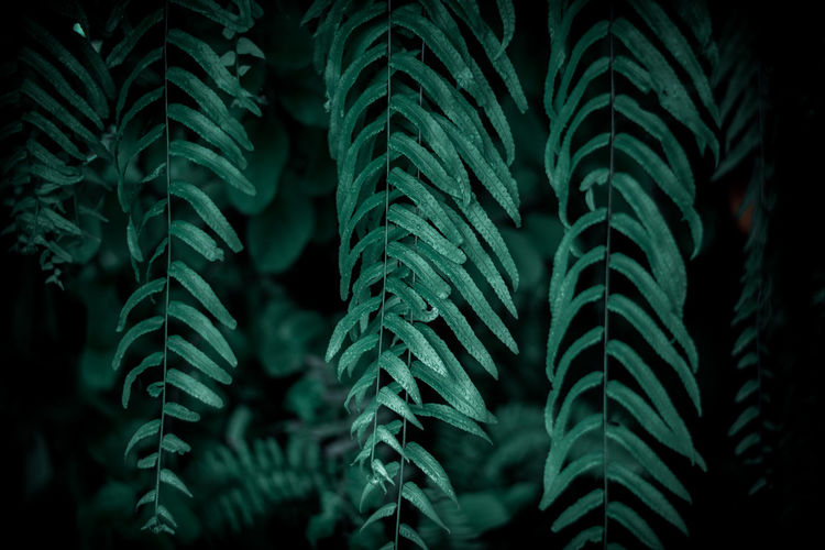 Close-up of fern leaves against trees