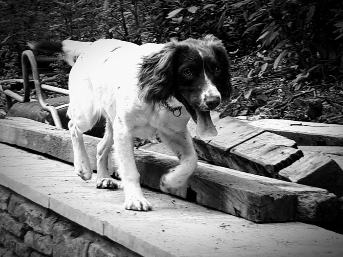 My princess bellatrix Dog Pets Domestic Animals One Animal Animal Themes Mammal Outdoors Wood - Material Day No People Sitting Nature Black And White Collection  Day Outdoors. Eye4photography  Taking Photos Samsungphotography Dogs Dogs Of EyeEm Paws For Thought