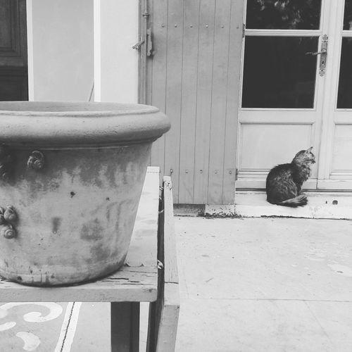 Chat Gato Cat Tendresse Animal Photography Vase Tenderness Animal Themes Animalofinstagram Catlovers Cats Of EyeEm Blackandwhite Black & White Blackandwhite Photography Escargots Domestic Cat Domestic Animals