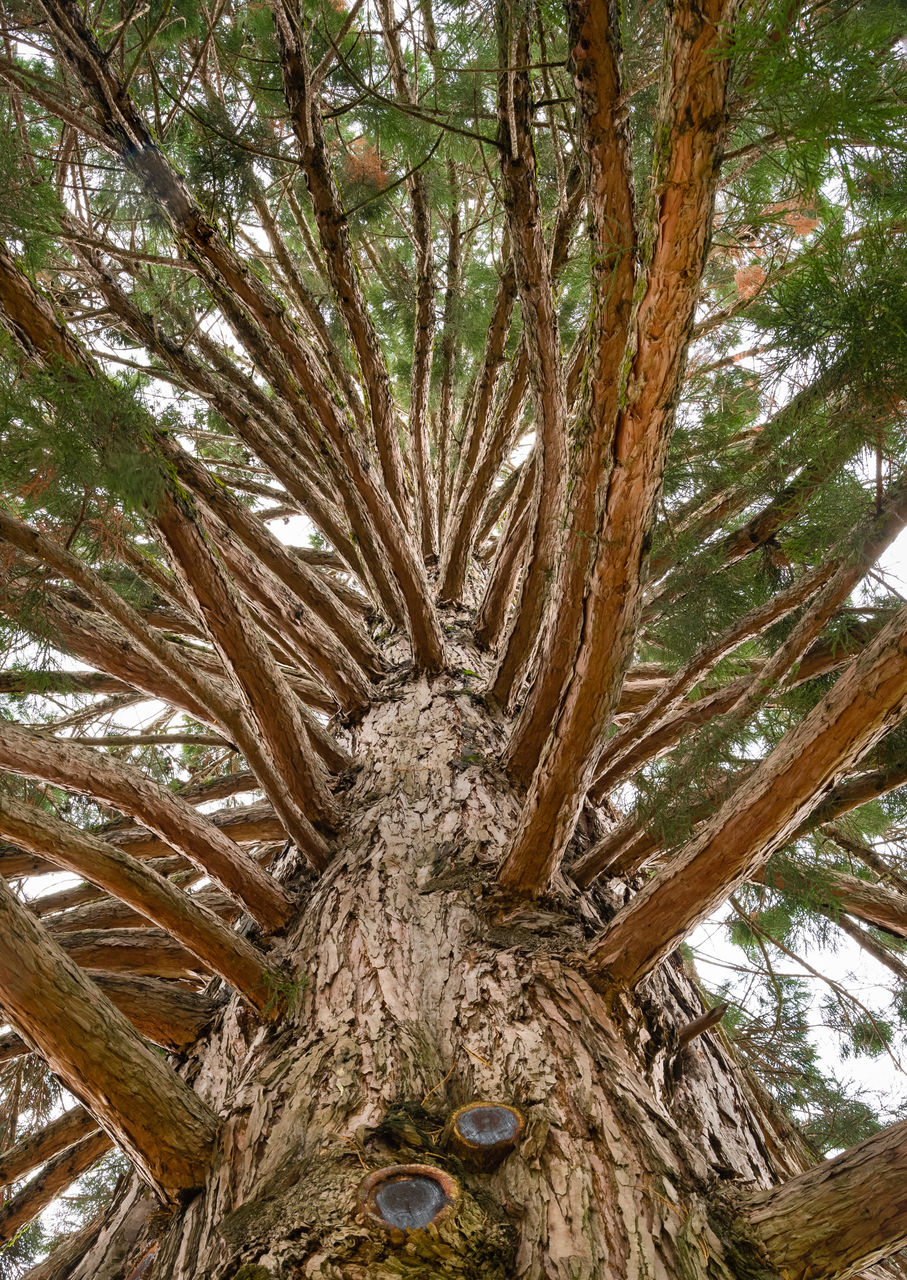 tree, plant, tree trunk, trunk, growth, low angle view, day, no people, nature, branch, land, tranquility, beauty in nature, outdoors, forest, close-up, palm tree, textured, pine tree, rough, bark, coniferous tree, palm leaf