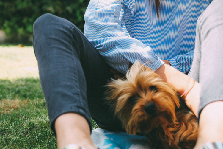 Midsection of woman sitting with dog on field