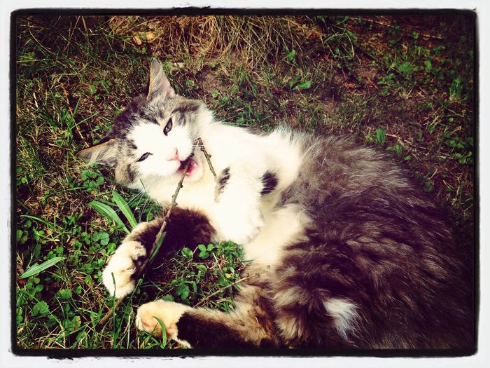 Cat Mycat Animals Love :)