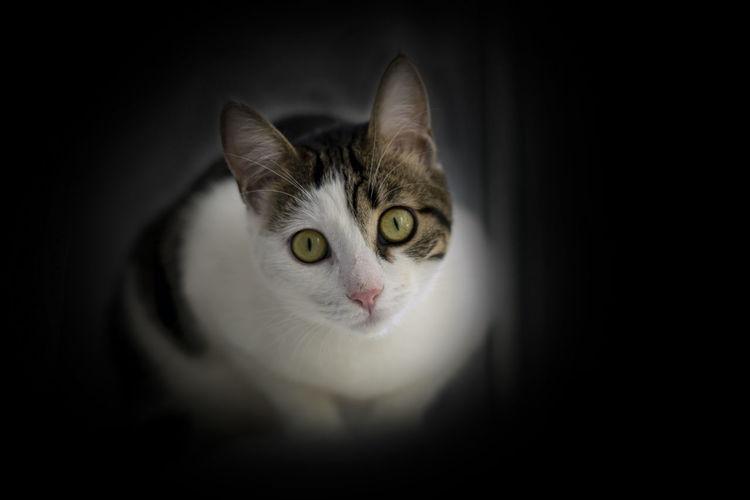 Close-up portrait of a cat over black background