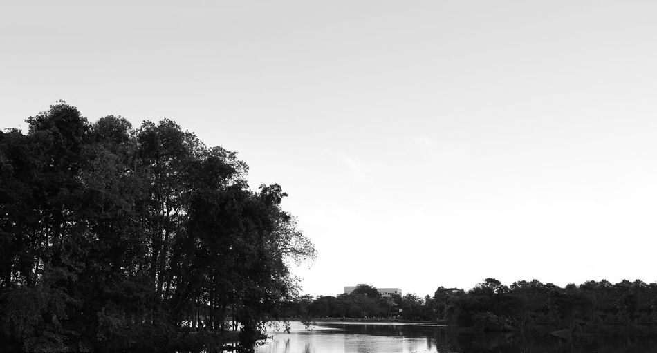 Tree Plant Sky Beauty In Nature Water Nature Environment Outdoors Clear Sky Lake Land Monochrome
