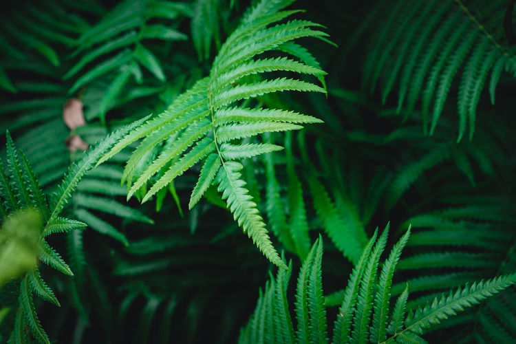 Green Color Growth Plant Close-up Leaf Nature Plant Part No People Beauty In Nature Selective Focus Fern Natural Pattern Day Tree Full Frame Outdoors Backgrounds Freshness High Angle View Focus On Foreground Pine Tree Needle - Plant Part Coniferous Tree