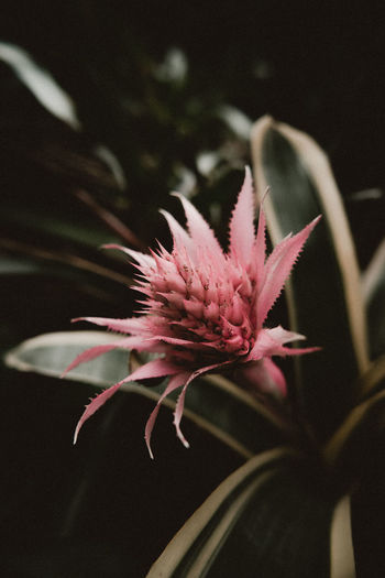 Hamburg Nature Plants So Vibes Aniamls Animals Explore Flowers Mood No People Ogranic Outdoors Sony Tropical