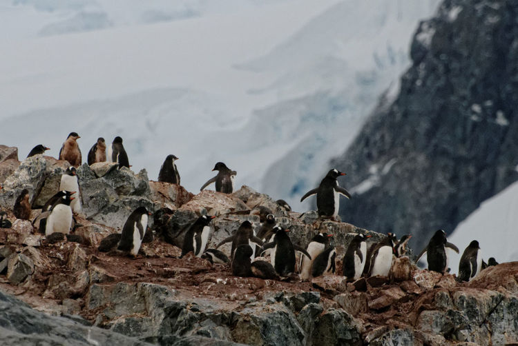 Penguins on rock formations