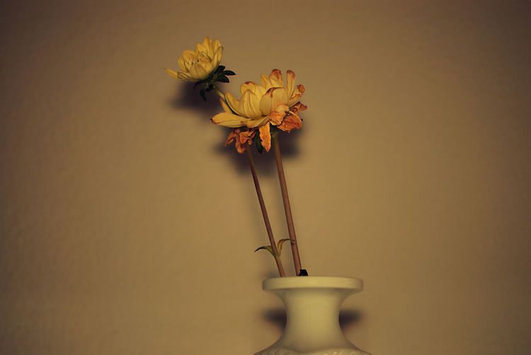 Close-up of yellow flowers in vase against wall