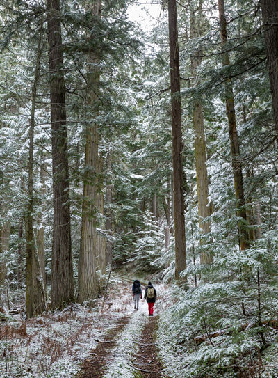 People Walking On Snow Covered Trail In Forest
