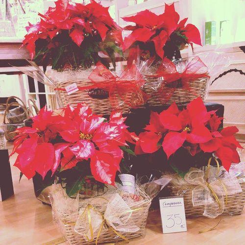 """Ya estan aquí nuestras cestas """"kedabien"""" by Alea. El regalo perfecto estas navidades para tu amig@, para el dentista, para tu peluquer@ o para quien tu quieras... cesta con flor de pascua, vela aromática de bougies la Française y latita vintage de chocolates Amatller. 35€ y te la enviamos donde quieras en Vigo ciudad. Alea Ideasalea Xmas Navidad Bougieslafrançaise Aleafloristerias Amatller Poinsettia ."""