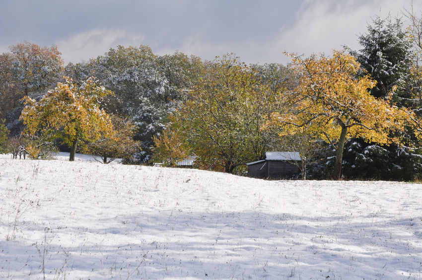 fruit tree Meadow, early snow in October, colored leaves Autumn Colors Autumn Leaves Weather Cold Temperature Early Snowfall Fruit Trees Landscape Season  Snow Tree Winter