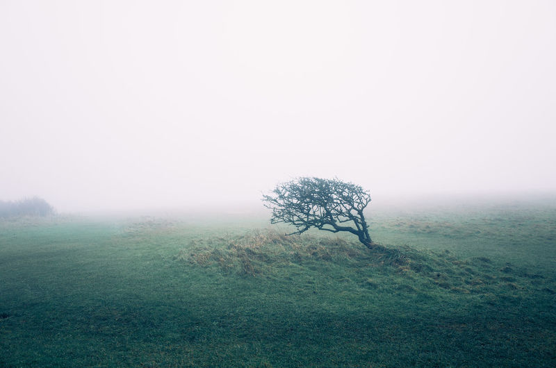 Bare tree on field in a foggy day