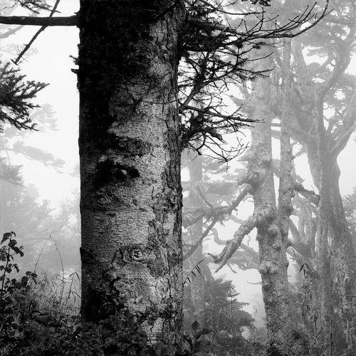Trunks Trees