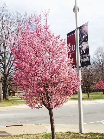 Spring in Carbondale!!! SIUC