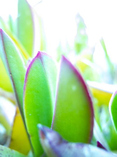 الأعشاب الطبيعية والطبية ليست مجرد معتقدات فولكلورية بل هي تحتوي على مركبات فعالة Les Photographies Nature Les Plus Belles Photos De Nature Nature Images PHOTO & NATURE أعشاب الأعشاب والبذور الطبيعية العشب علمياً عشب First Eyeem Photo
