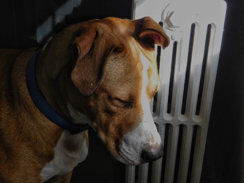 🙇 Meditate Silent Moment Dogs Of EyeEm Pitbulls Beauty Nikonphotography EyeEm Best Shots