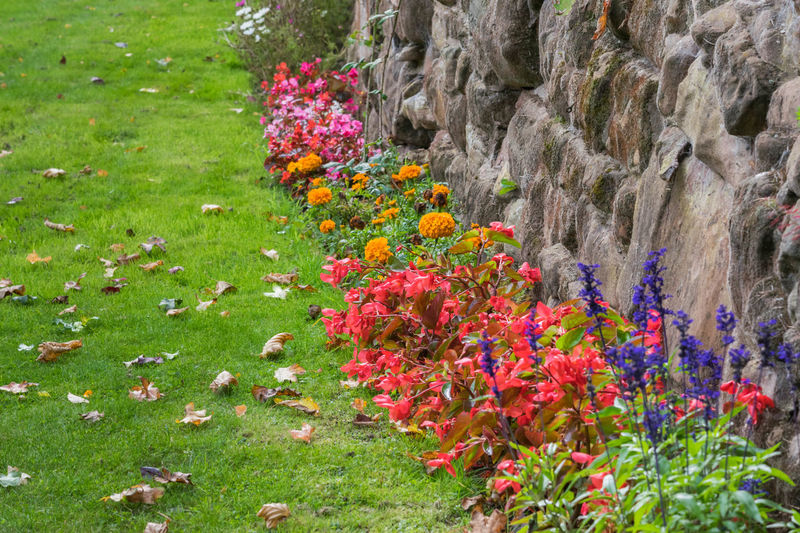 flowers mix in the park Green Park Flowers Beauty In Nature Day Flower Flowers Mix Freshness Grass Green Color Growth Multi Colored Nature No People Outdoors Plant