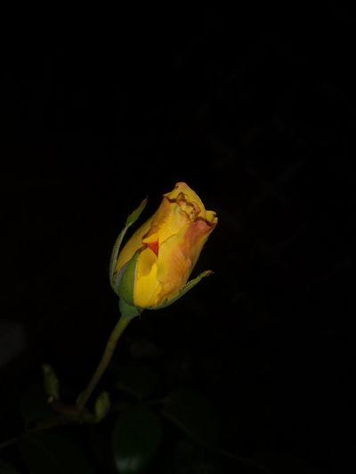 UnderSea Flower