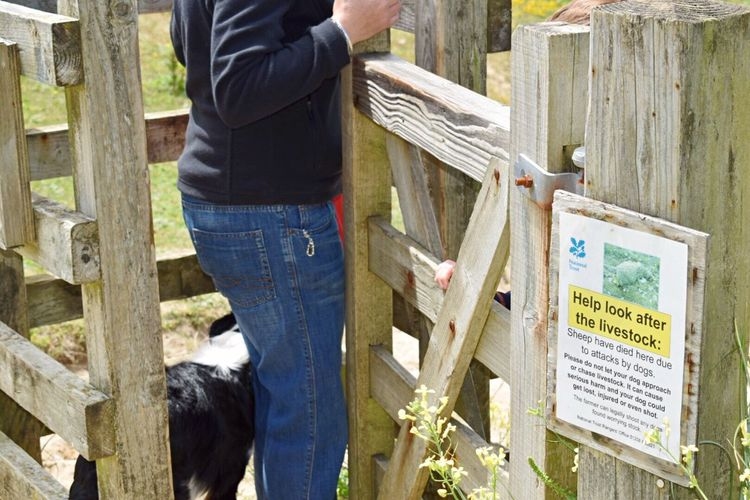 Wooden Gate One Person Jeans One Animal Women Outdoors Real People Wooden Post Sign Warning Sign National Trust Text Communication Dog Outdoor Photography
