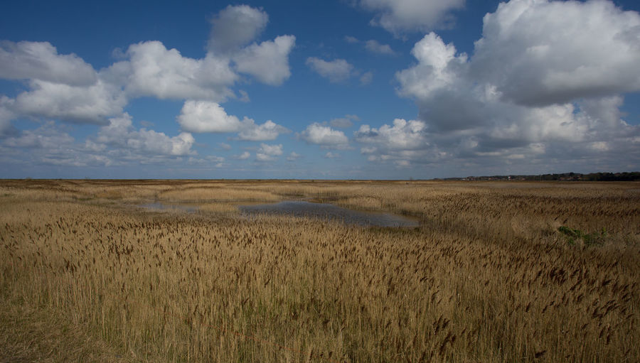 Reedbeds and salt marshes, Blakeney, Norfolk, United Kingdom Sky Cloud - Sky Land Environment Scenics - Nature Tranquil Scene Landscape Beauty In Nature Tranquility Grass Plant Non-urban Scene Field Nature No People Day Horizon Over Land Growth Horizon Outdoors Reedbeds Saltmarsh Blakeney Norfolk Uk Water Wildlife Habitat Reeds Wetlands Copy Space