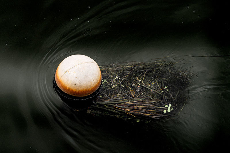 High angle view of jellyfish swimming in lake