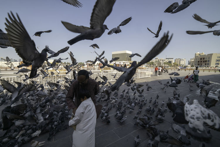 A boy and and Father Feeding Birds in Streets of Doha, Qatar. Animals In The Wild Flying Vertebrate Animal Wildlife Group Of Animals Bird Large Group Of Animals Spread Wings Real People Architecture Sky Building Exterior Built Structure Nature City Flock Of Birds People Mid-air Feeding  Seagull Outdoors Ijas Muhammed Photography Doha Qatar