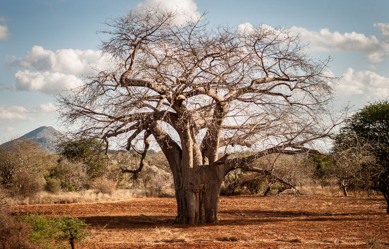Kenya The Week on EyeEm African Beauty African Tree Baobab Tree Beauty In Nature Cloud - Sky Dry Environment Horizon Over Water Landscape No People Non-urban Scene Plant Rural Scene Sahel Desert Scenics - Nature Sky Tranquility Tree