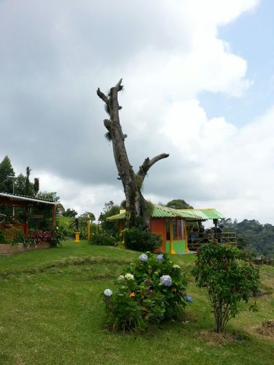 Taking Photos Relaxing Colombia Es Bella Things That Are Green