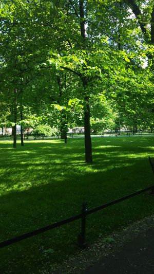 Beautiful. 💙 Park Life Trees #leaves #sunlight #warm Color Nature In The City