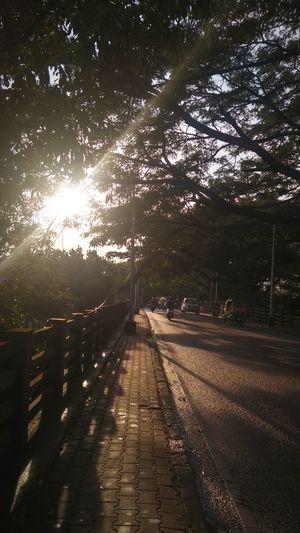 the golden hour Thegoldenhour Thebridge Naturewalks Rayofhope Rayoflight Light Tree Sunlight Sky