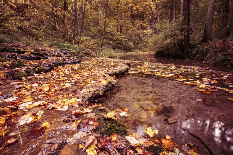 Herbst, Autumn Day Forest Leaf Nature No People Outdoors Tree Water