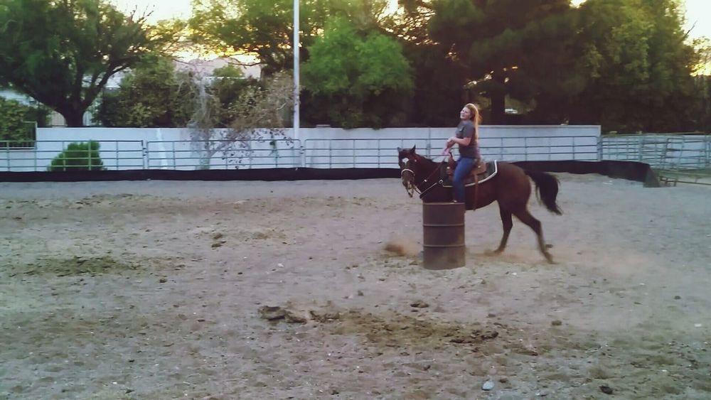 Barrel Racing Training Indie Pretty Summer Awww Horse