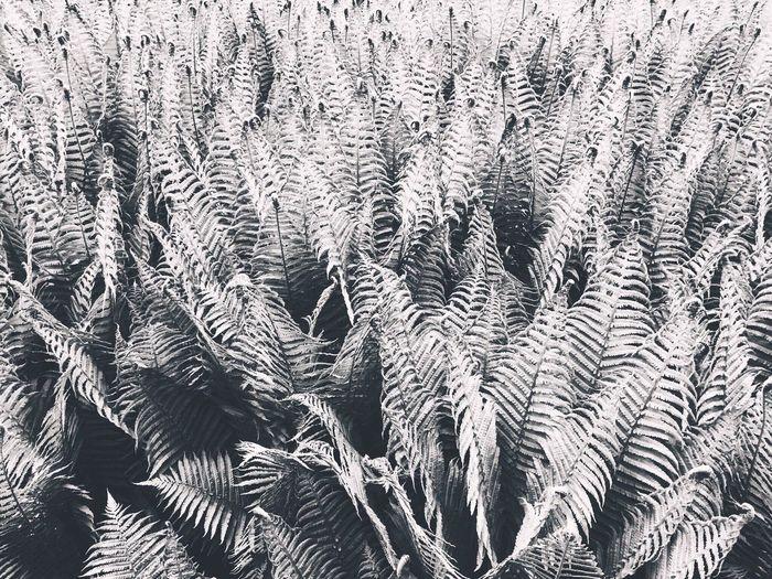 •fern• Nature