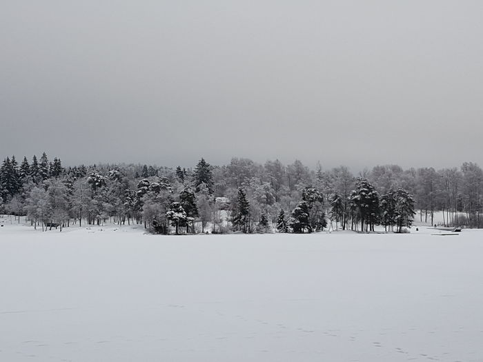 Grey & White Snow Frozen Lake Trees And Sky Silence Of Nature Cold Temperature Polar Climate Snowcapped Mountain Tree Area Tree Forest Nature Winter Beauty In Nature Tranquility Frozen No People