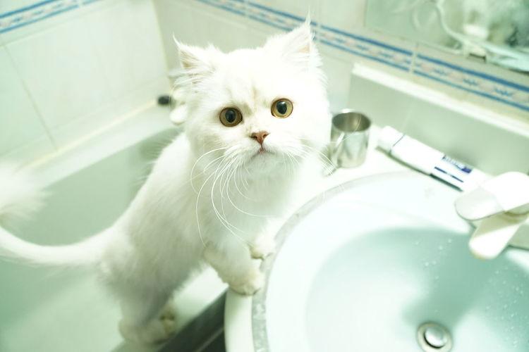 Portrait of cat rearing on sink