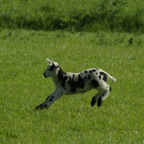 High angle view of a dog running on grass