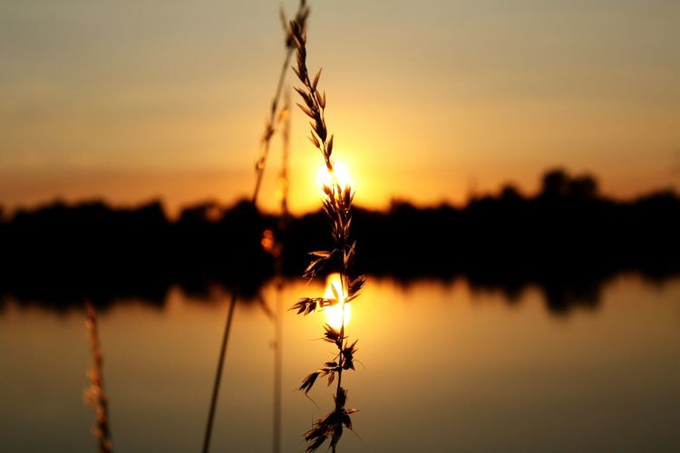 Scenic view of plant against lake at sunset