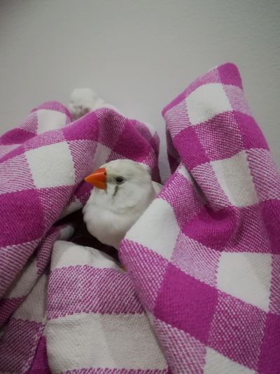 My zebrafinken.😘😍🐦 Animals Photooftheday Wildlife Photography EyeEm Best Shots Colors Pink Color White Bird White Bird Photography My Sweet Bird Zebrafinken Black Eyes Animal Themes Baxkground GERMANY🇩🇪DEUTSCHERLAND@ Home Pets Pink Color Close-up Animal Hospital