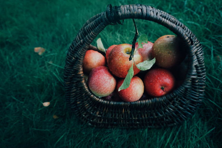 Close-up of apples in basket on field