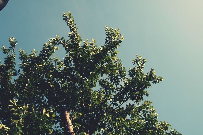 EyeEm Nature Lover ありがとう 桜の木