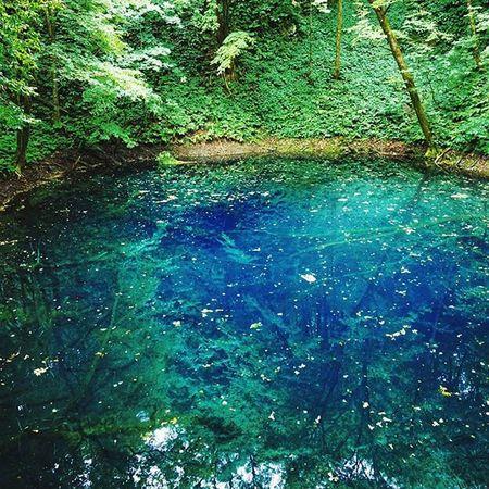 まさに、インクをこぼしたような青。 限りなく底に近いところまで見えました✨ . Vscocam Travelgram 行くぜ東北2015 夏の思い出2015 Japan Nature 白神山地 Ig_aomori