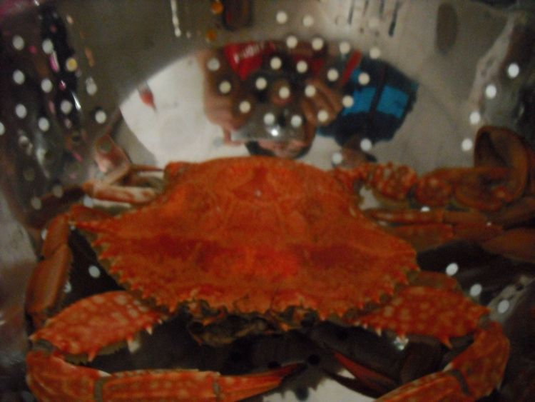 Dinner Time Crab Red Crab Watching You Watching You Watching Me Yummy Supper Great Meal Thank You Today Food Seafoods Bowl