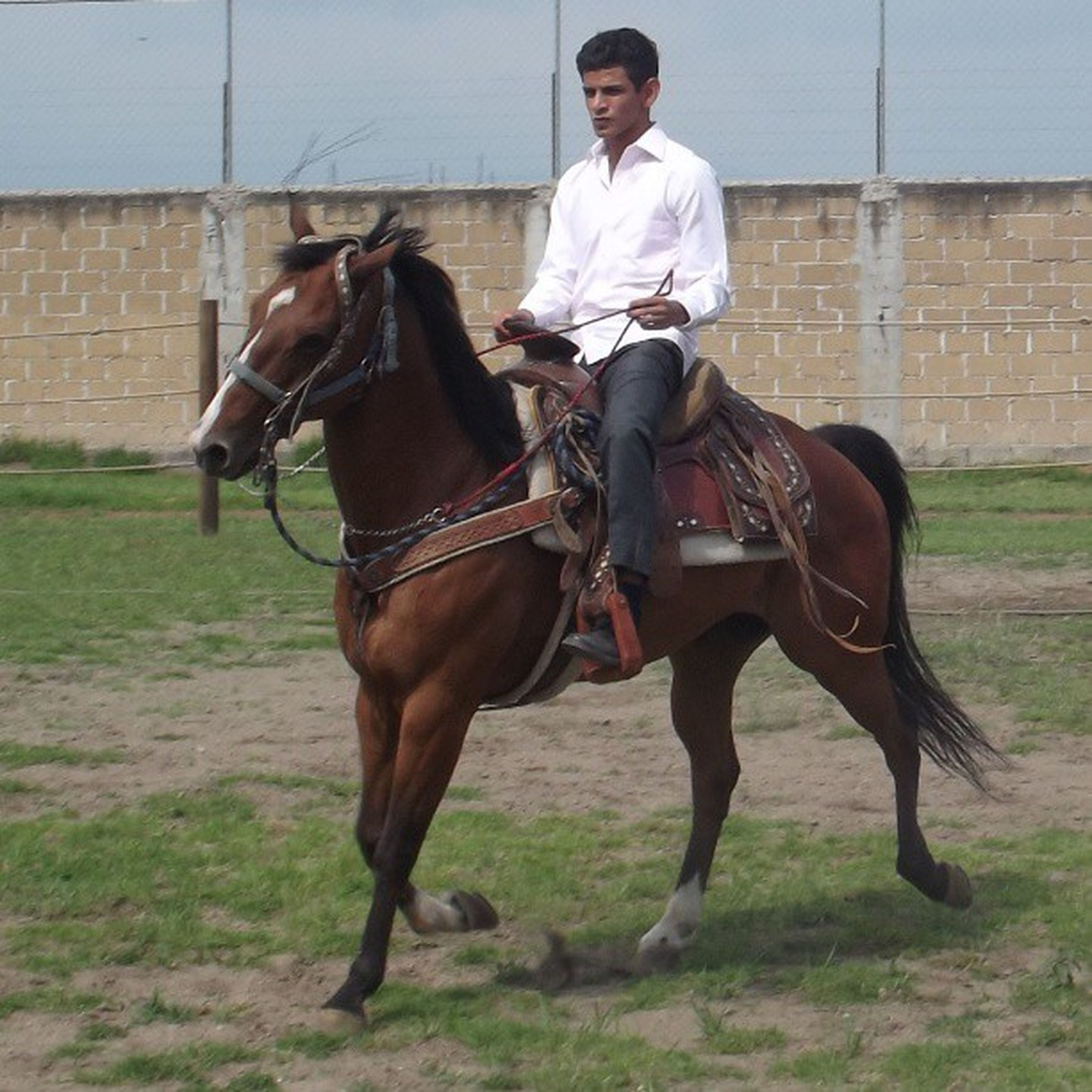 horse, animal themes, domestic animals, livestock, mammal, working animal, one animal, full length, standing, lifestyles, bridle, young adult, side view, two animals, leisure activity, casual clothing, herbivorous, men