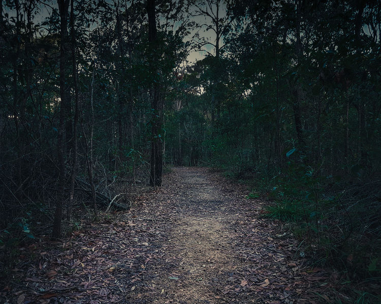 Find your path Trail Dark Misterious Mistery Path Hike Track Alone Inviting Enticing Serene Woods Forest Dangerous Shadows Explore Seek Dirt Road Least Travelled Bush Gloomy Trailblazing Hidden Places Unknown Unmarked Daring Intimidating Australia Night
