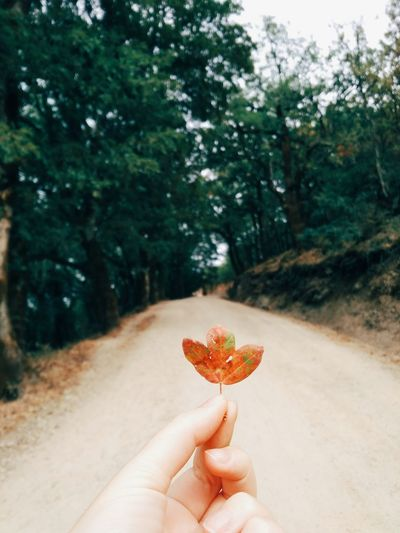 Exploring Sardegna Italia Leaves Leaf Nature Nature_collection Nature Photography Naturelovers Outdoor Photography Eyemphotography Eyem Best Shots Human Hand One Person Tree Personal Perspective Holding Outdoors Nature Forest Shades Of Winter