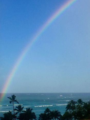 Rainbow Scenics Horizon Over Water No People Palm Tree Water Multi Colored Pacific Ocean View Ocean View Honolulu, Hawaii Island Tropics Tropical Island Lost In The Landscape Second Acts Island Of Oahu, Hawaii Waikiki Waikiki Beach Tropical Paradise Sky Ocean Perspectives On Nature Oahu / Hawaii An Eye For Travel The Great Outdoors - 2018 EyeEm Awards