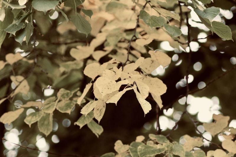 Leaf EyeEm