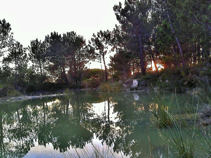 By the lake Reflection Nature Lake Beauty In Nature Water Outdoors Fishing Live In Woods